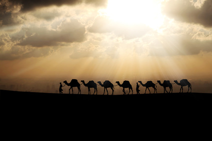 camels queue in the sunset background